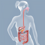 Anatomy and Physiology of the Duodenal Switch (DS)